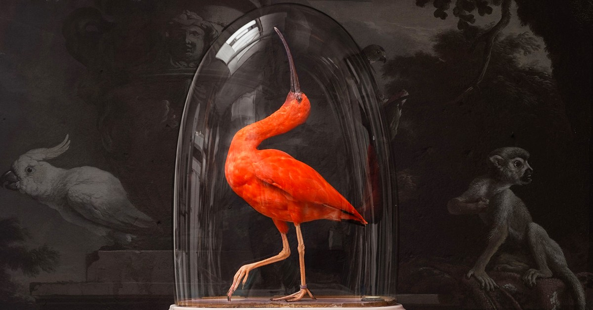 l taxidermie art sinke van tongeren
